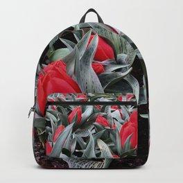 Keukenhof Red 3 Backpack