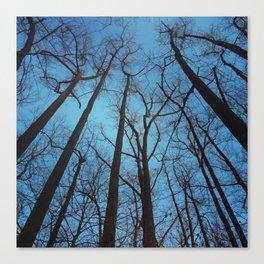 Rock Creek Park, Maryland Canvas Print