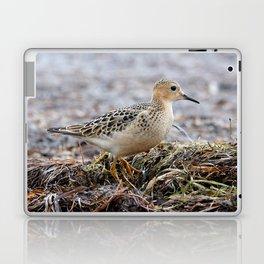 Profile of a Buff-Breasted Sandpiper Laptop & iPad Skin