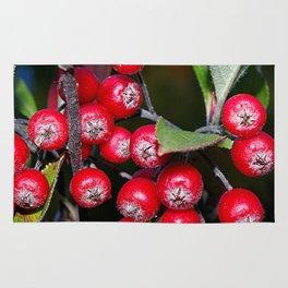 Brilliant red autumn berries - Aronia fruit Rug