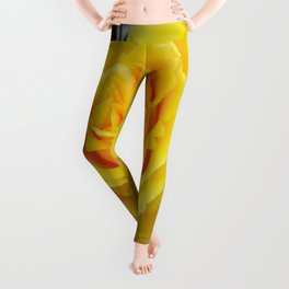 Head On View Of A Yellow Rose With Garden Background Leggings
