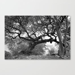 Gray Tree Canvas Print