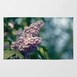 Syringa vulgaris lilac Rug