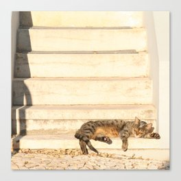 The sun shines on all cats equally Canvas Print