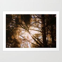 Sunlit Dreams Art Print