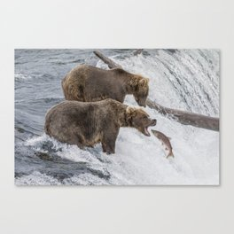 The Catch - Brown Bear vs. Salmon Canvas Print