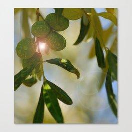 Greek Olive Tree Canvas Print