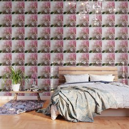 pink flower, the peony Wallpaper