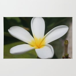 A Single Plumeria Flower Macro  Rug