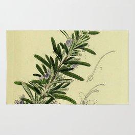Botanical Rosemary Rug