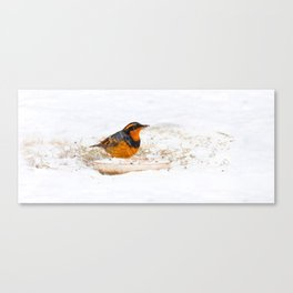 Varied Thrush in the Snow Canvas Print