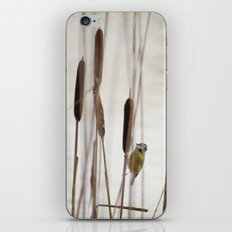 A little surprise iPhone & iPod Skin
