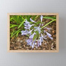 Floral Blossom Framed Mini Art Print
