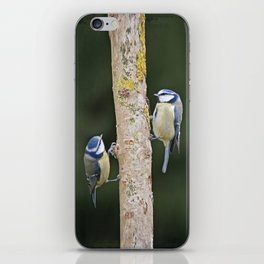 Blue Tit ( Cyanistes caeruleus) iPhone Skin
