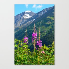 Fireweed ~ Mid-Summer Canvas Print