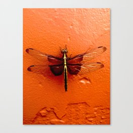 Dragonfly on the Wall Canvas Print