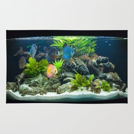 Aquarium fishes  Rug