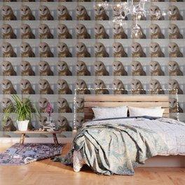 Barn Owl on Alert Wallpaper