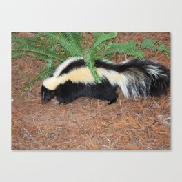 Lil Stinker Canvas Print