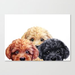 Toy poodle trio, Dog illustration original painting print Canvas Print