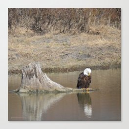 Self Reflection! Canvas Print