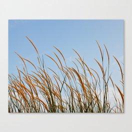 Wonderful teasel Canvas Print