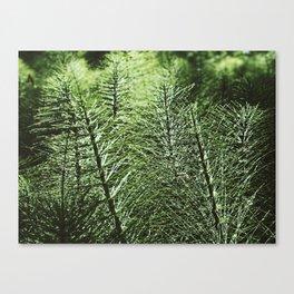 Sentinel Green Canvas Print