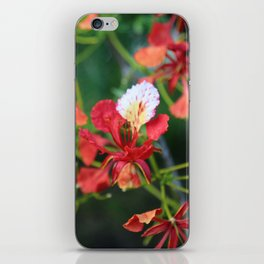 """Poinciana turns over a new leaf"" iPhone Skin"