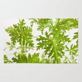 Pelargonium citrosum plant foliage macro Rug