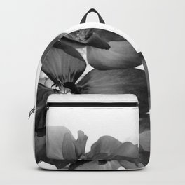 Black Geranium in White Backpack