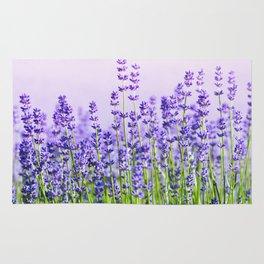Lavender 15 Rug