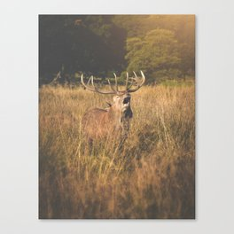 Red Deer Rutt Canvas Print