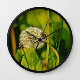 Last Dandelion in Sunlight Wall Clock