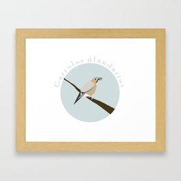Eurasian jay Framed Art Print