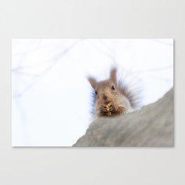 Squirrel with a walnut Canvas Print