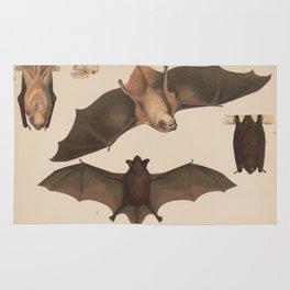 Vintage Flying Bat Illustration (1874) Rug