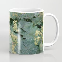 Alchemilla mollis flowers Coffee Mug