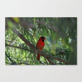 Cardinal Chill Canvas Print