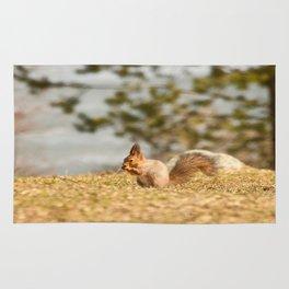Squirrel's Lunch Break #decor #society6 Rug