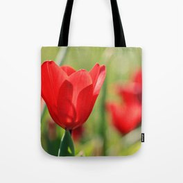Red tulips in backlight 2 Tote Bag