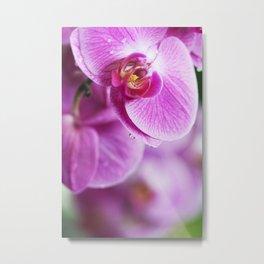 Graceful Orchids !! Metal Print