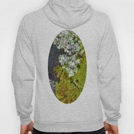 Tree Bark with Lichen#8 Hoody