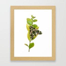 Oleander Hawk-moth Framed Art Print