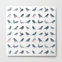 Sparrow Catalog Metal Print