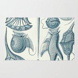 Ernst Haeckel Peridinea Plankton Rug