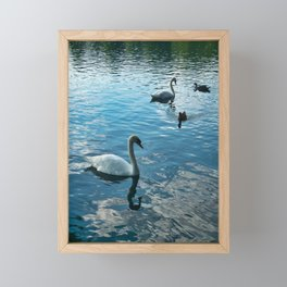 Ducks and Swans Framed Mini Art Print