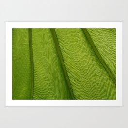 Green Leaf Texture 05 Art Print