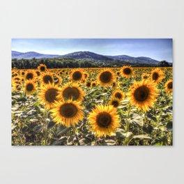 The Sunflower Summer Canvas Print