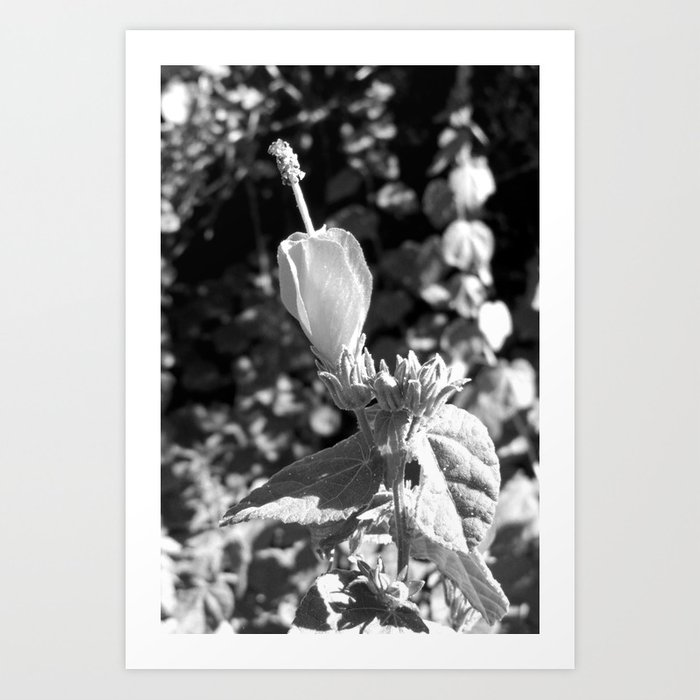 Arboretum Flower- Black and White Art Print