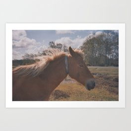Wild Horse at Heart Art Print